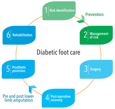 Diagram showing the 6 phases of diabetic foot care